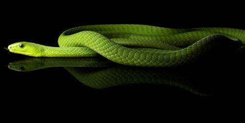 зеленая змея в воде