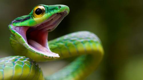 зеленая змея нападает