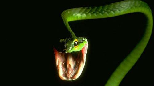 зеленая змея укусила