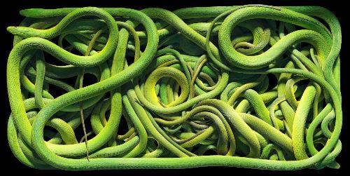 много зеленых змей