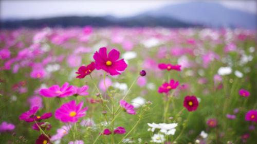 Живые цветы толкование сонника