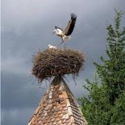 Гнездо на крыше