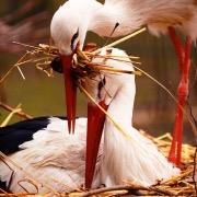 Птицы в гнезде