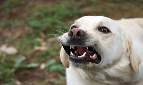 Фото Сонник рыжая собака ластится