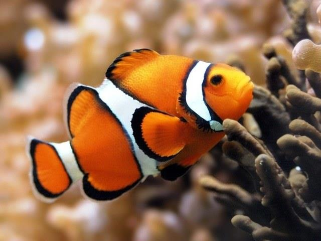 К чему сниться мешок рыбы фото