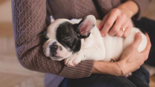 подарить щенка