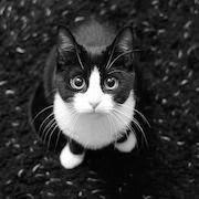 К чему снится черный кот который ласкается фото