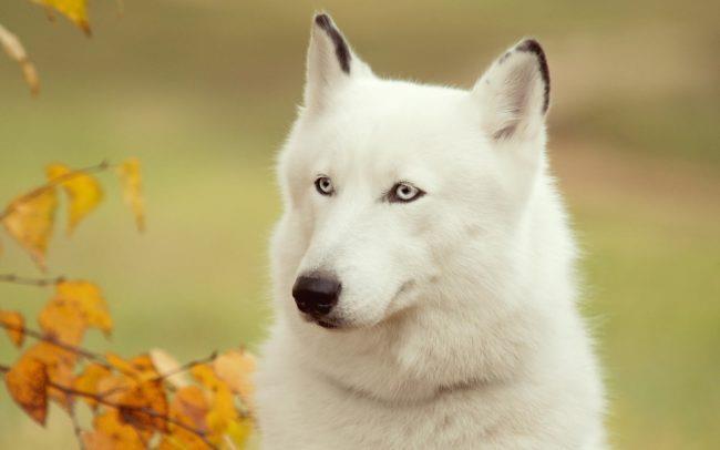 К чему снятся добрые собаки женщине фото