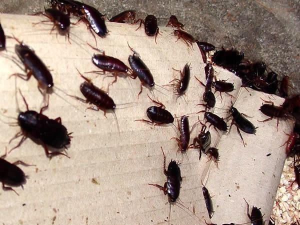 Тараканы в постели