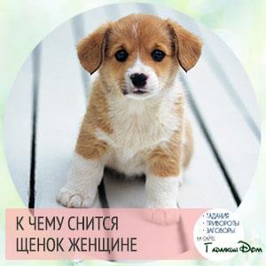 Мне приснилась собака из моего детства,мои родители всегда ухаживали за ней,это была собака босса моих родителей.