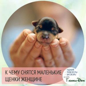 По соннику фрейда – маленькие щенки возле мамы – вы встретите любовь.
