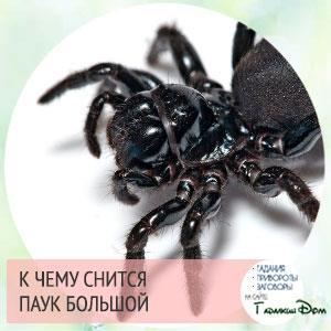 к чему снится паук большой черный