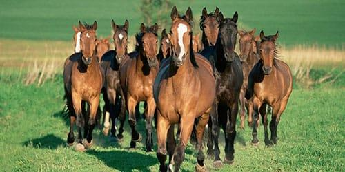 видеть табун бегущих лошадей во сне