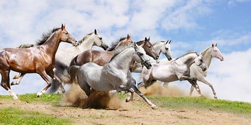 к чему снится табун белых лошадей