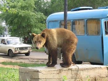 Медведь на улице