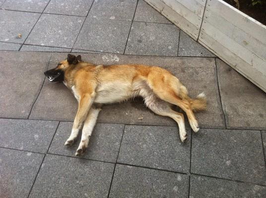 Фото Сонник умершая собака снится живой