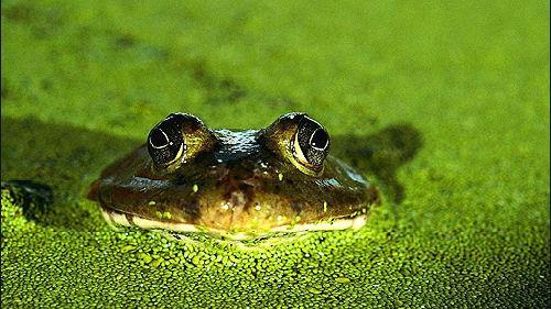 зеленая вода во сне