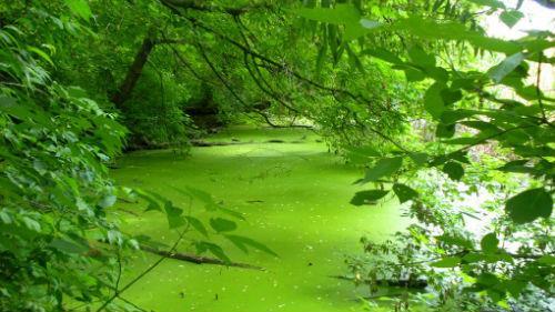 зеленая вода в реке