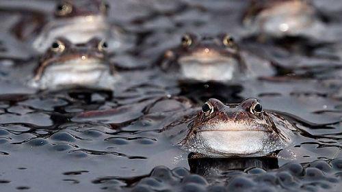 лягушки много маленьких