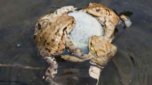 приснились лягушки много в воде