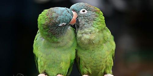 птички целуются