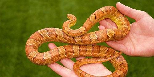 к чему снится поймать змею