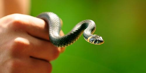 поймать змею руками во сне