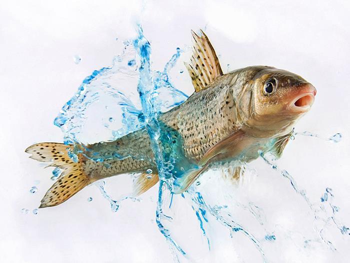 К чему снится порезанная рыба женщине