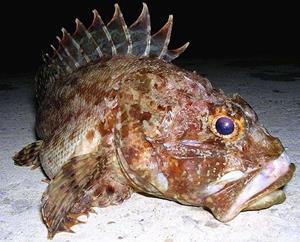 Рыба с шипами