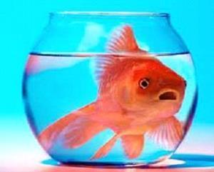 Рыбка плавает в аквариуме