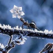 Муравей и снежинка