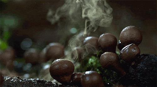 червивые грибы