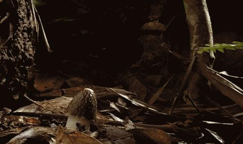 собирать грибы во сне