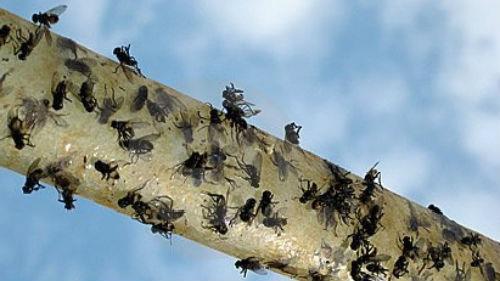 мухи на липкой ленте