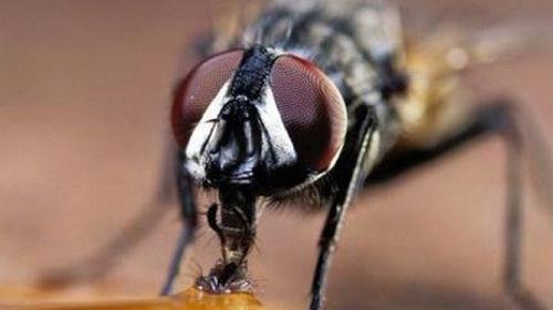 большая муха в доме
