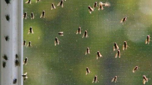 мухи на окне