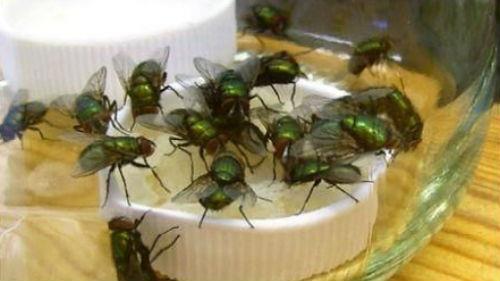 мухи много в комнате