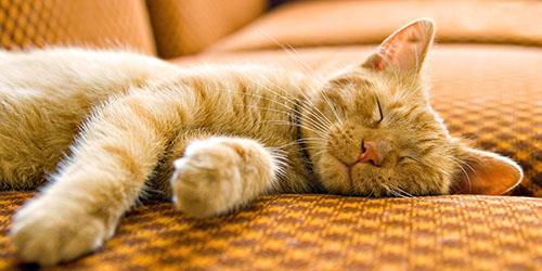 видеть во сне рыжую спящую кошку