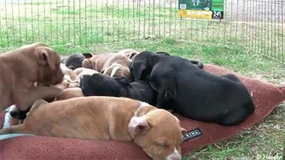 собака во сне