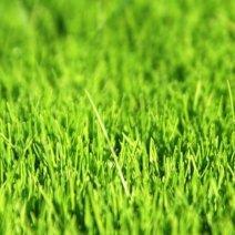 Выясняем, к чему снится зеленая трава!