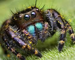 04-Сны о пауках1