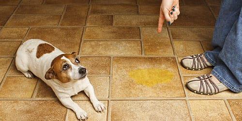 собака справила нужду