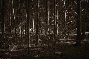 Частый лес