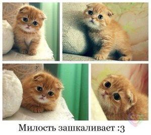 Сонник. кот ест рыбу