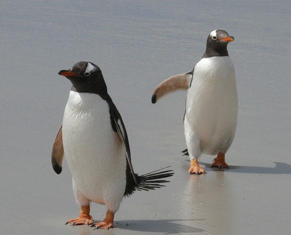 К чему снятся пингвины фото