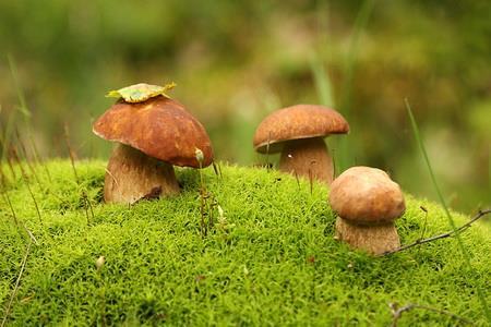 К чему снится перебирать грибы фото
