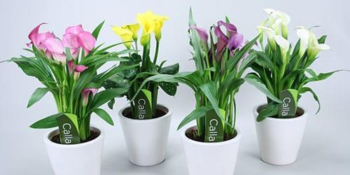 к чему снятся комнатные растения в горшках
