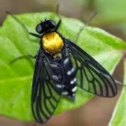 К чему снятся мухи мошки фото