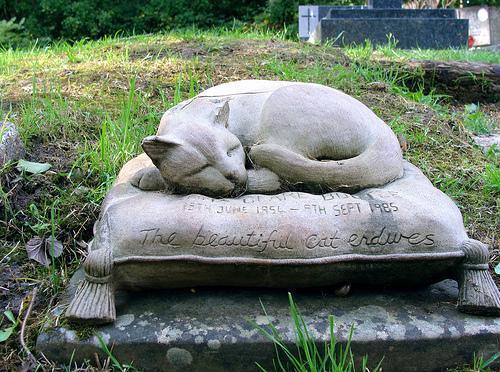 Кошка лежит на подушке - памятник