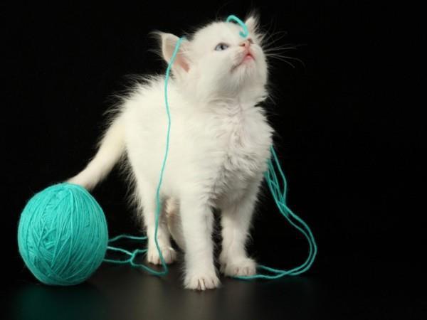 Котёнок запутался в шерстяных нитках